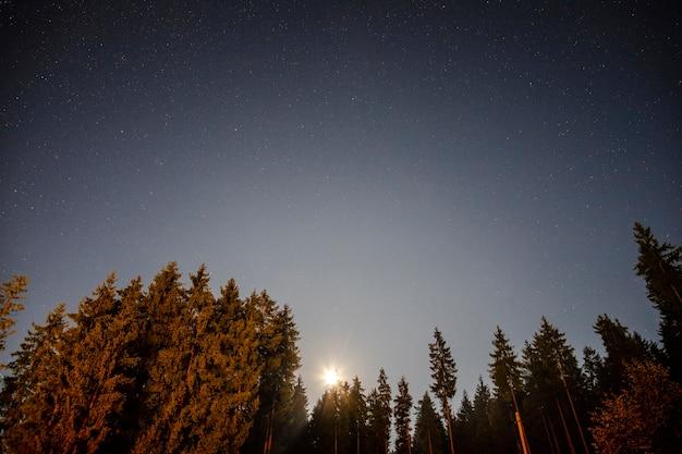 太陽を上げると木の低ビュー 無料写真