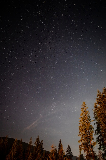 夜の木のロービューショット 無料写真