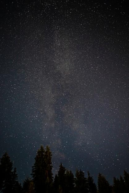 星空の夜空と常緑樹 無料写真