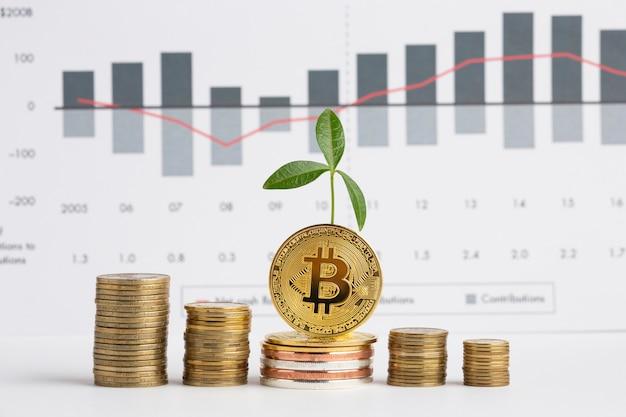 グラフの前に植物とコインの山 無料写真