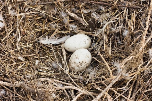 農場で鶏から干し草の新鮮な卵 無料写真