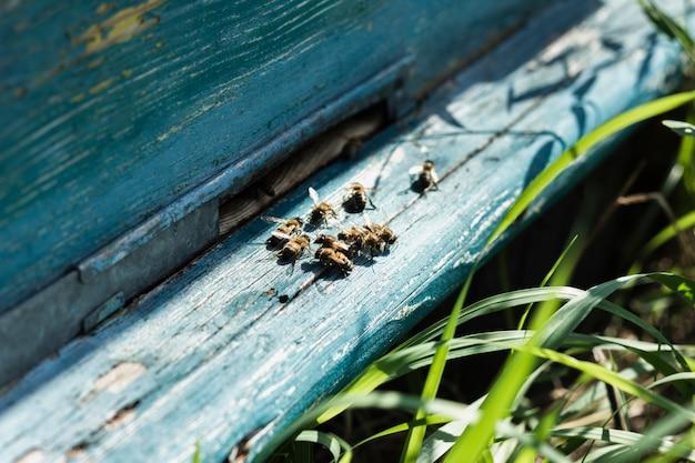 木製のハイブの上に座ってクローズアップミツバチの巣箱 無料写真
