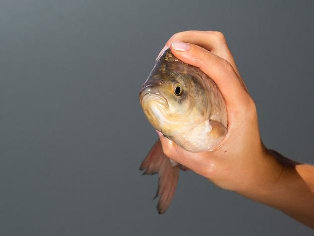新鮮な魚を持っているクローズアップ手 無料写真