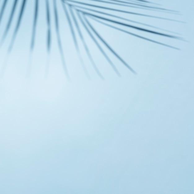 Ясное голубое небо с листьями ветви Бесплатные Фотографии
