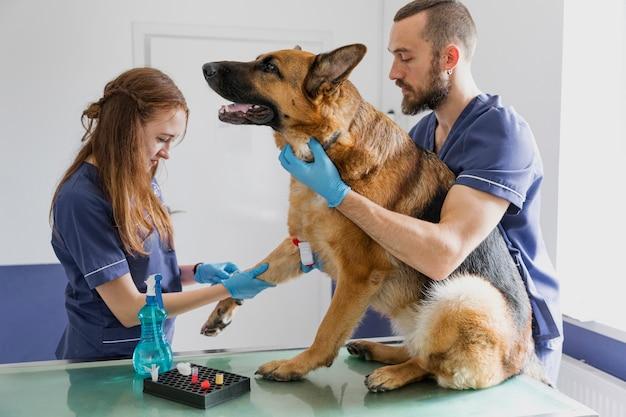 大きな犬が元気になるのを助けるミディアムショットの慎重な医師 無料写真