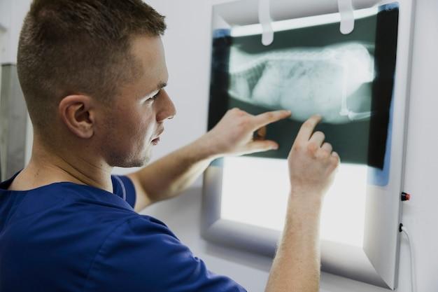 動物のレントゲン写真をチェックするクローズアップ医師 無料写真