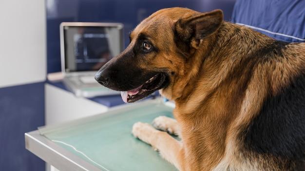 獣医クリニックでクローズアップのかわいい犬 無料写真