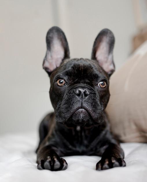 愛らしい小さな犬の肖像画 無料写真