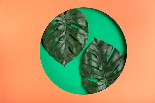 現実的な葉を持つ幾何学的な紙の形 無料写真