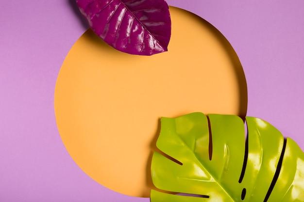 葉とトップビュー紙サークル 無料写真