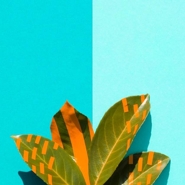グラデーションブルーコピースペース背景とイチジクの葉 無料写真