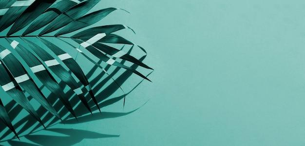 コピースペースの背景を持つシダの葉 無料写真