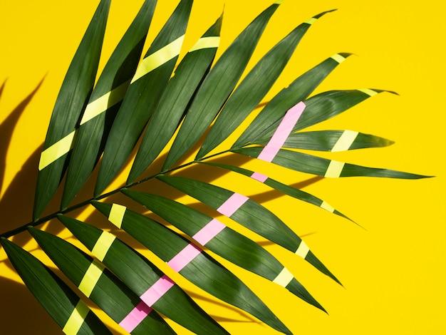 緑に描かれた熱帯シダの葉と黄色の線とピンク 無料写真
