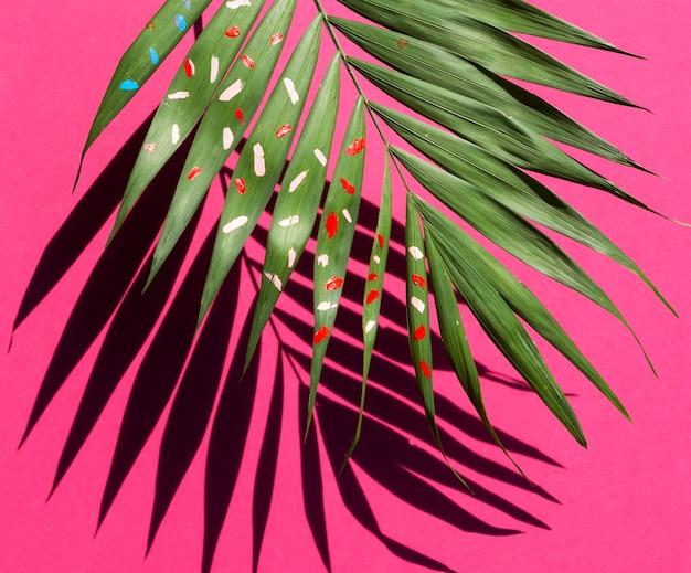 ピンクの背景に影とシダの葉の半分 無料写真