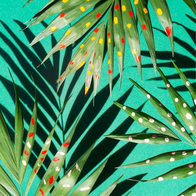 さまざまなシダの枝に影のトップビュー 無料写真