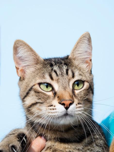 耳のみじん切りを持つ正面の飼い猫 無料写真