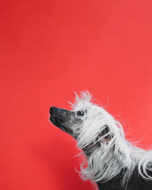 コピースペースの背景を見上げるかわいい子犬 無料写真
