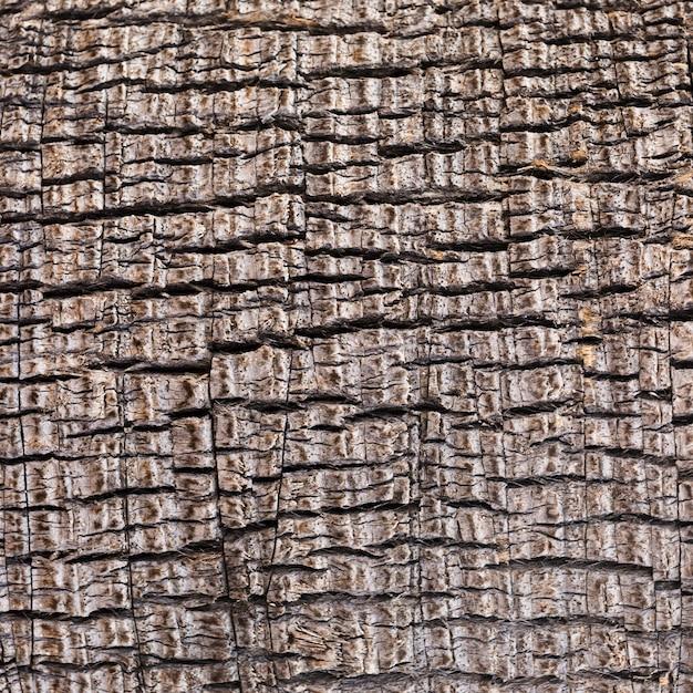 極端なクローズアップの木製テクスチャ 無料写真