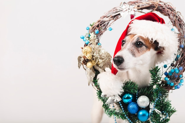 Симпатичная собака в шапке с рождественским украшением Бесплатные Фотографии