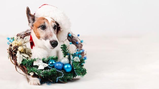 クリスマスの装飾と帽子をかぶっている犬 無料写真