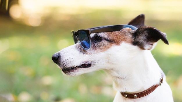 Крутая собака в темных очках Бесплатные Фотографии