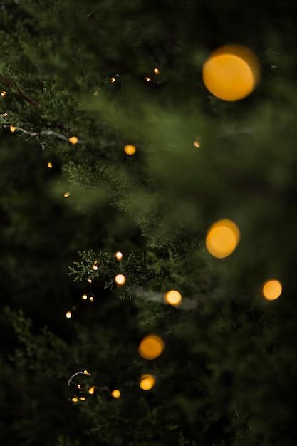 Рождественская концепция с красивым деревом и огнями Бесплатные Фотографии
