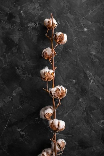 正面の綿繊維の枝 無料写真