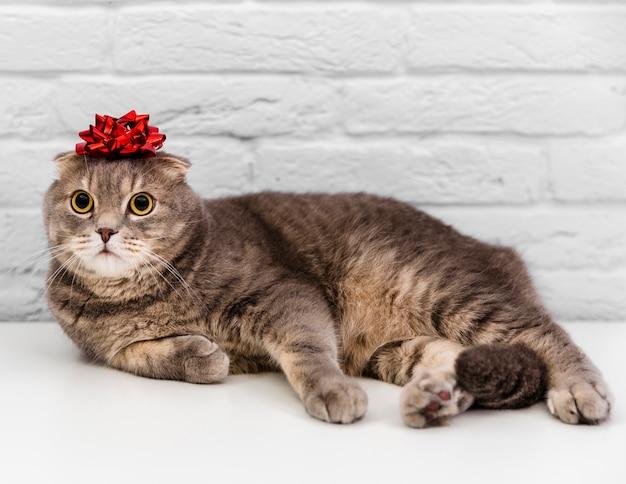 頭に赤いリボンとかわいい猫 無料写真