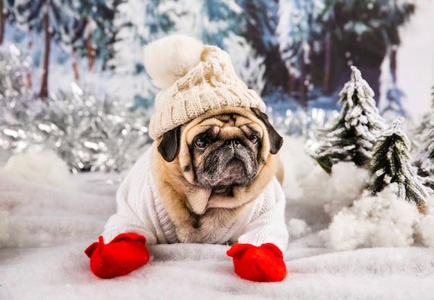 セーターの帽子と手袋を身に着けているかわいいパグ 無料写真