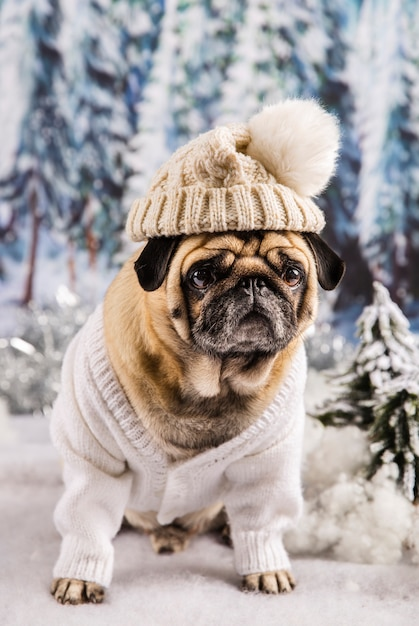 セーターと帽子を着てかわいいパグ 無料写真