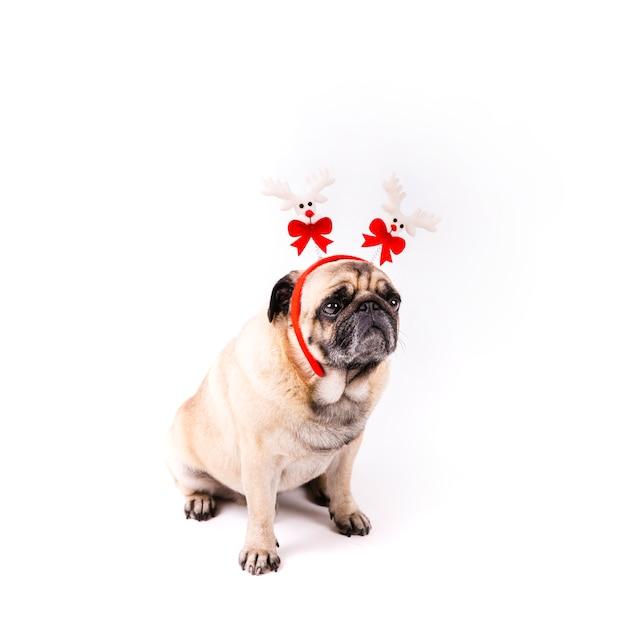 クリスマスヘッドバンドとかわいいパグ 無料写真