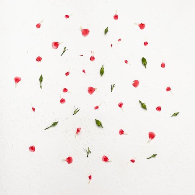 カラフルな花びらのフラットレイアウトフラワーアレンジメント 無料写真