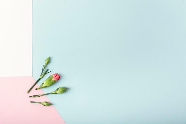 カラフルな背景とコピースペースを持つ花 無料写真