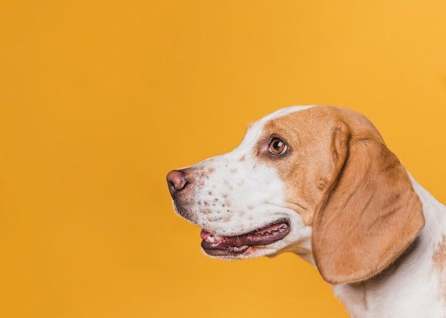 Боковой вид собаки с красивыми глазами Бесплатные Фотографии