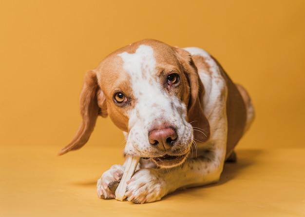 骨を食べて幸せな愛らしい犬 無料写真