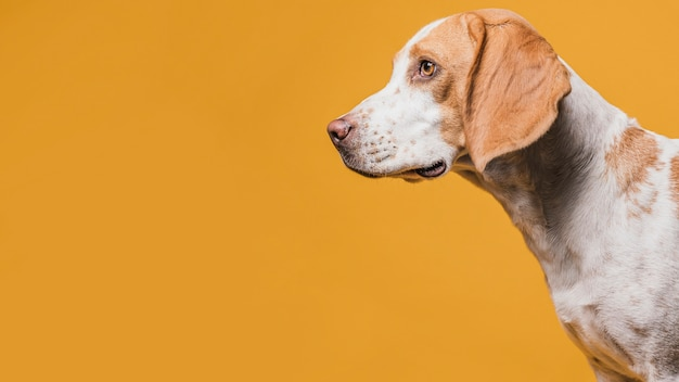 コピースペースでかわいい犬の肖像画 無料写真