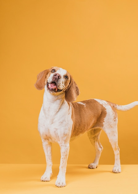 Портрет прекрасной собаки, торчащей из языка Бесплатные Фотографии