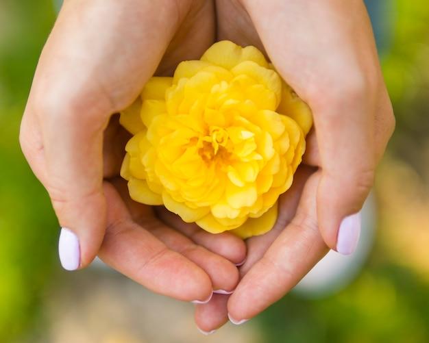 天然のバラを持っているトップビュー手 無料写真