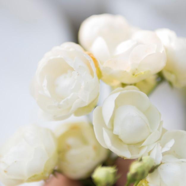 自然な白いバラのクローズアップ 無料写真