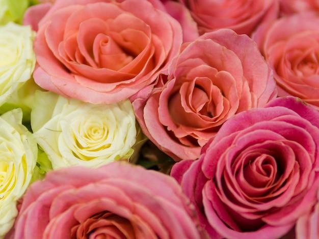 カラフルな天然のバラのクローズアップ 無料写真
