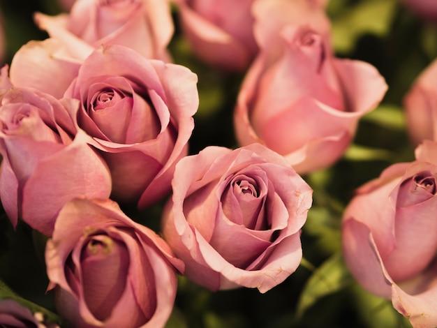 Крупным планом красивых свежих роз Бесплатные Фотографии