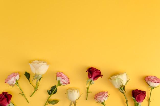 黄色の背景に新鮮なバラ 無料写真