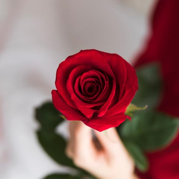 赤いバラを保持しているクローズアップの女性 無料写真