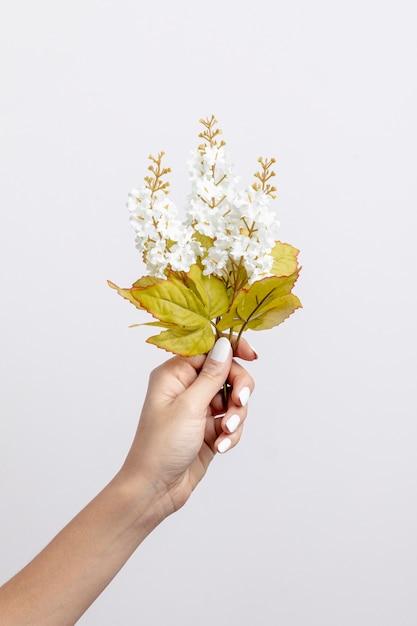 Крупным планом женщина, держащая белые цветы Бесплатные Фотографии