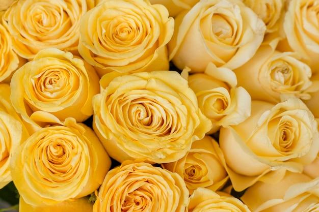 黄色いバラのクローズアップの束 無料写真