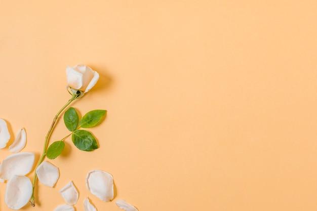 コピースペースを持つトップビュー白い花びら 無料写真