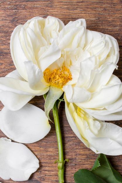 テーブルの上のクローズアップの白いバラの花びら 無料写真