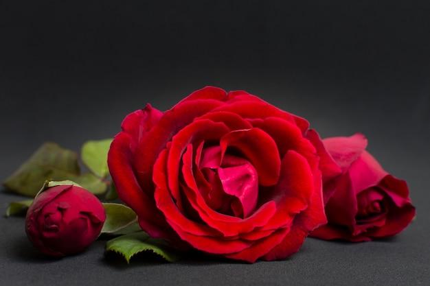 クローズアップの芸術的な赤いバラのコンセプト 無料写真