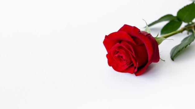 バレンタインデーのコピースペースとバラの高角 無料写真