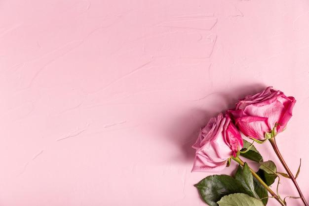 Красивые розовые розы с копией пространства Бесплатные Фотографии